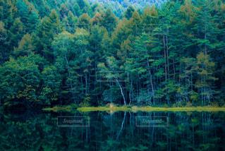 木々が反射する御射鹿池の写真・画像素材[1160508]