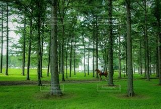 木々を練り歩く馬の写真・画像素材[1160530]