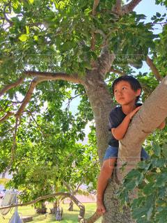 木登りする子供の写真・画像素材[1180421]