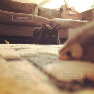 近くのソファで横になっている猫の写真・画像素材[981225]