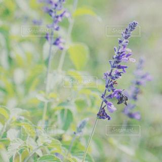 幸せの青い蜂の写真・画像素材[1196047]