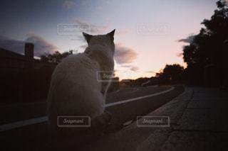 夕日とお見送りの写真・画像素材[1255252]