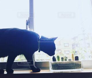 黒猫✖️サボテンの写真・画像素材[1255257]