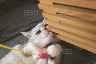 猫じゃらし休憩中の写真・画像素材[1266803]
