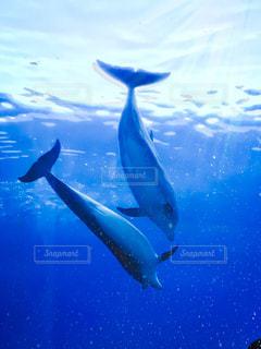 青い水で泳ぐ魚の写真・画像素材[2363998]