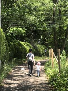 子ども,犬,公園,森林,親子,散歩,新緑,パパ