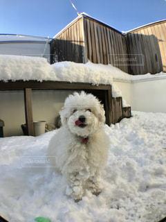 ベランダで雪遊び☆の写真・画像素材[976248]