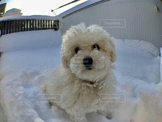 雪だるまミルティー☆の写真・画像素材[976251]