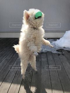 ボール大好き♡の写真・画像素材[986202]