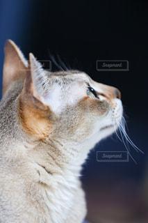 近くに猫のアップの写真・画像素材[980987]