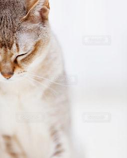 近くに猫のアップの写真・画像素材[980989]