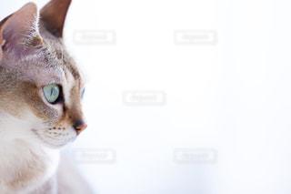 近くに猫のアップの写真・画像素材[980994]