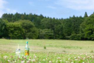 近くに緑のフィールドのの写真・画像素材[1265363]