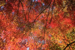 フォレスト内のツリーの写真・画像素材[1637965]