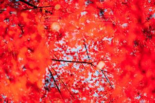 近くの木のアップの写真・画像素材[1653932]