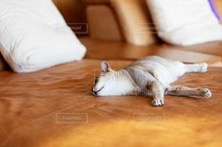 ベッドに横たわる猫の写真・画像素材[2497643]