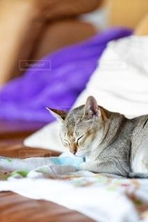 ベッドに横たわる猫の写真・画像素材[2497652]