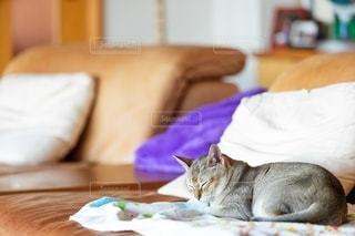 ベッドに横たわる猫の写真・画像素材[2497658]