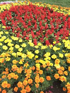 アウトドア,公園,花,花畑,休日,色,ガーデン