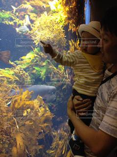 親子,水族館,子供,赤ちゃん
