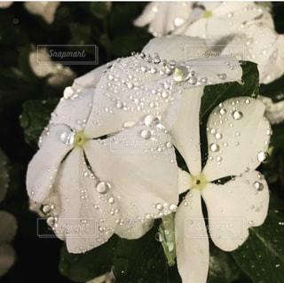 風景,花,夜,雨,屋外,水,天気,雨の日,キレイ