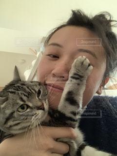 猫,写真,自撮