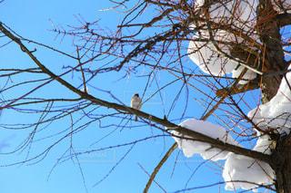近くの木のアップの写真・画像素材[1739905]
