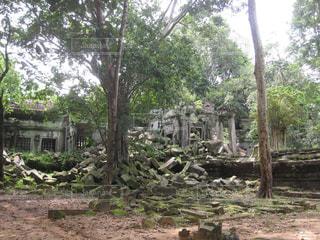 自然,森林,木,屋外,樹木,遺跡,旅,地面,カンボジア,冒険,歴史,日陰,古代,汚れ,草木,日中,フォトジェニック