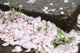自然,花,春,森林,雨,草,グレー,コンクリート,石,草木,湿る