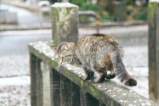 猫,自然,公園,花,春,桜,動物,屋外,花びら,草,ねこ,子猫,コンクリート,石,草木