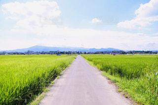 農村の田舎道を走行する列車の写真・画像素材[1864007]