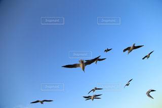 空を飛んでいるカモメの群れの写真・画像素材[1864053]