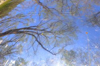 近くの木のアップの写真・画像素材[1870350]