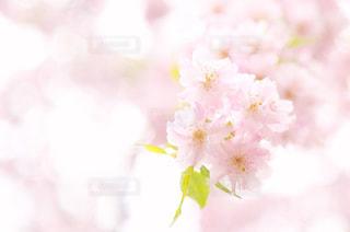 花の写真・画像素材[2017495]