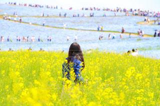 風景,花,春,屋外,青空,青,後ろ姿,黄色,菜の花,景色,女の子,人物,背中,人,後姿,ブルー,地面,ネモフィラ,イエロー,ひたち海浜公園,後ろ,草木,あおぞら