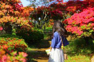 女性,春,屋外,ピンク,後ろ姿,景色,女の子,人物,背中,人,後姿,地面,茨城,草木,つつじ,つつじ祭り,笠間