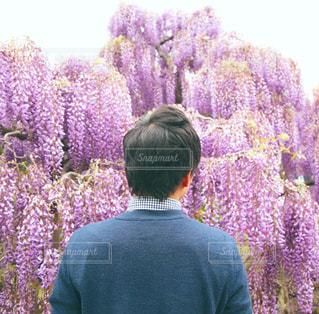男性,春,屋外,後ろ姿,紫,景色,男,藤,人物,背中,人,後姿,草木,足利,あしかがフラワーパーク,ふじ