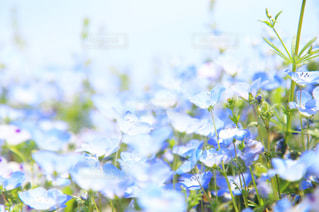 花のクローズアップの写真・画像素材[2142359]