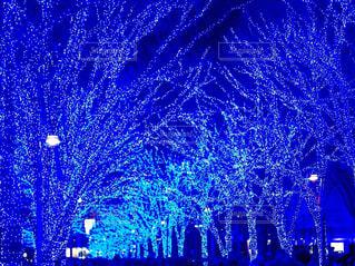 イルミネーション,クリスマス,青の洞窟