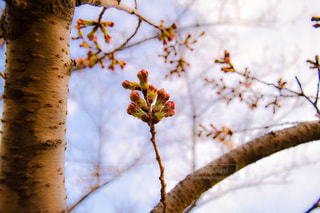 春の写真・画像素材[401618]