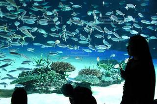 女性,熱帯魚,水族館,子供,休日,水槽,お出かけ