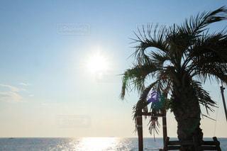 自然,海,空,屋外,太陽,ビーチ,海岸,光,ヤシの木