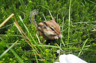 草の上に横になっている猫対象フィールドの写真・画像素材[737321]