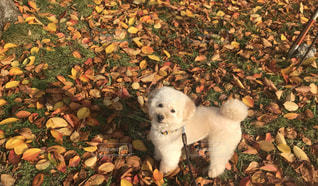 地面に横たわっている犬の写真・画像素材[851570]