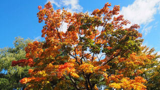 近くの木のアップの写真・画像素材[851778]