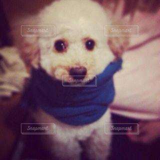 襟のシャツを着て犬の写真・画像素材[867443]