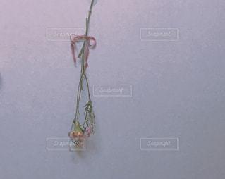 ピンク,ドライフラワー,お花,リボン,りぼん