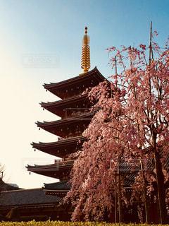浅草五重塔としだれ桜の写真・画像素材[1103760]