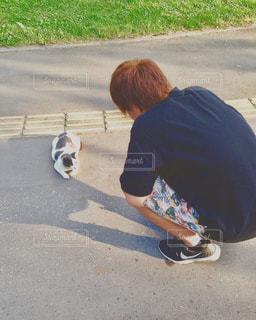 猫,自然,動物,散歩,北海道,野良猫