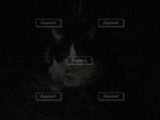 闇ネコの写真・画像素材[973911]